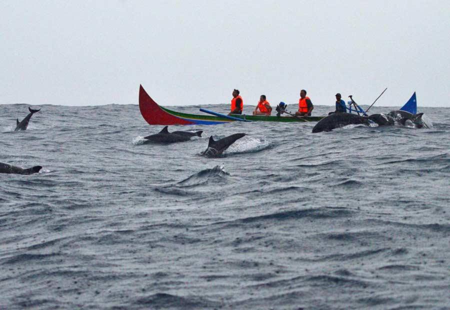 Lumba-lumba di sekitar teluk Kiluan