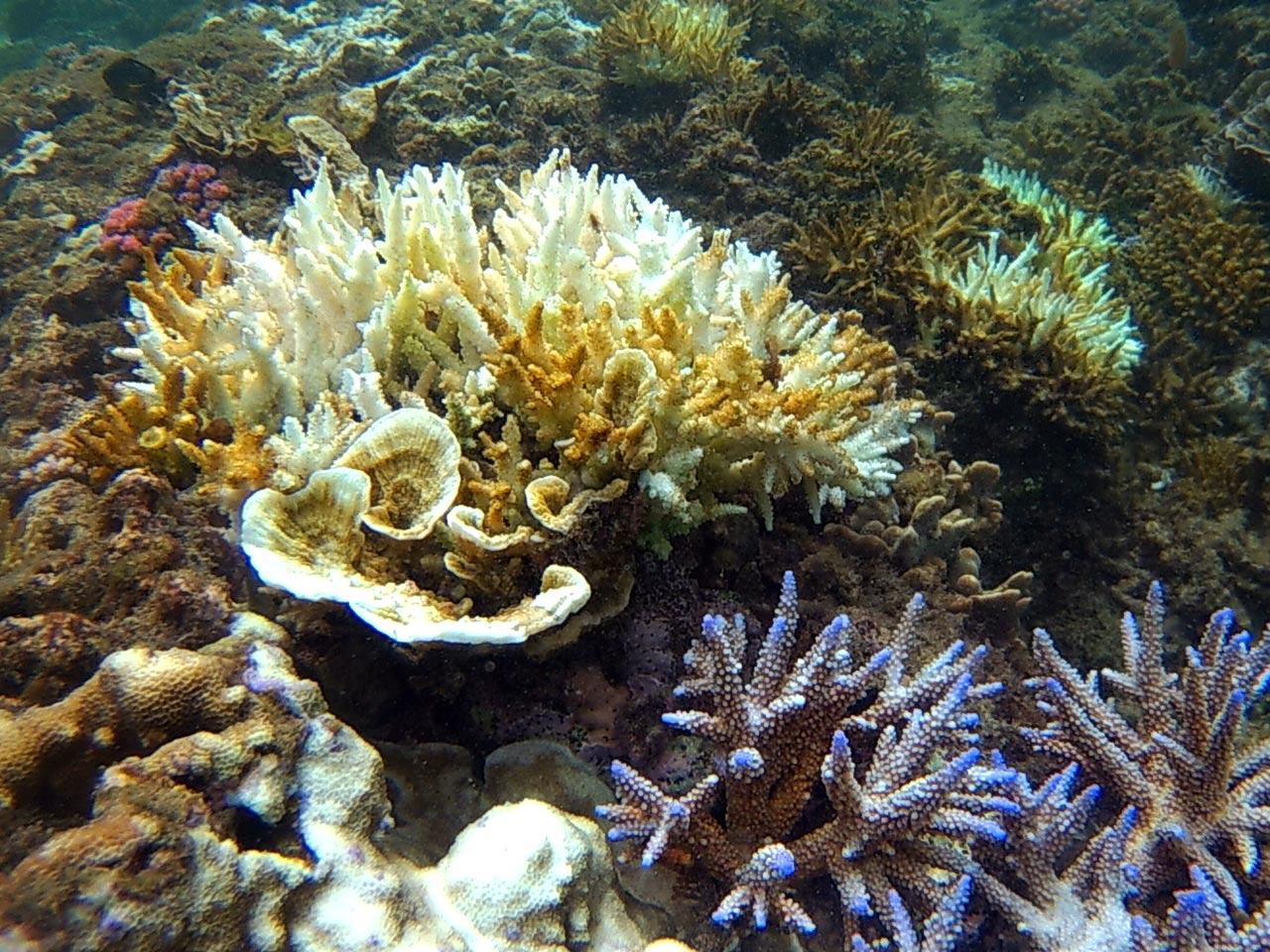 Teluk Kiluan - Tempat Wisata di Lampung - Yopie Pangkey - 4