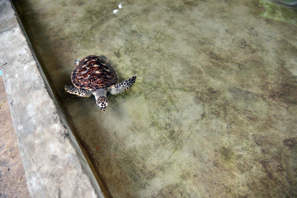 wisata belitung - pulau lengkuas - yopie pangkey - 33