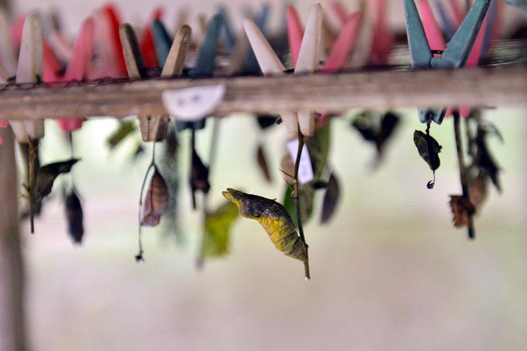 Taman kupu kupu Gita Persada - Yopie Pangkey - 12