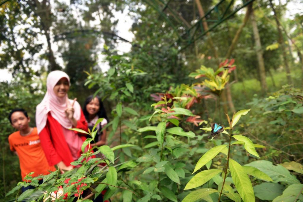 Taman kupu kupu Gita Persada - Yopie Pangkey - 3