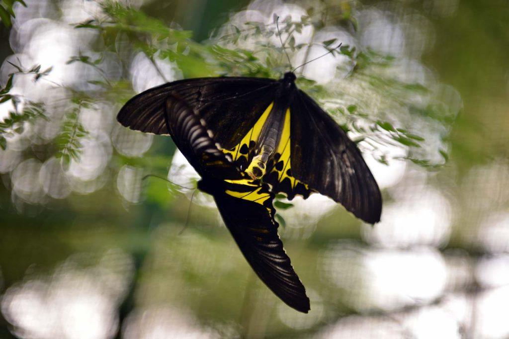 Taman kupu kupu Gita Persada - Yopie Pangkey - 4