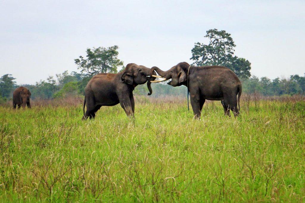 gajah - taman nasional way kambas - yopie pangkey - 13