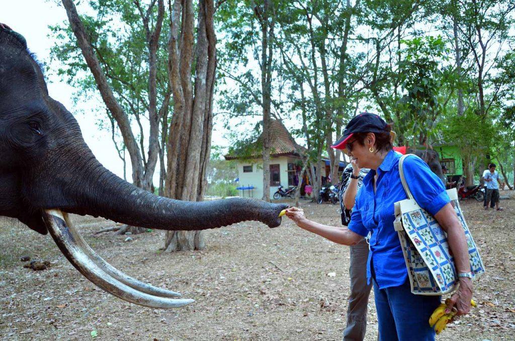gajah - taman nasional way kambas - yopie pangkey - 3