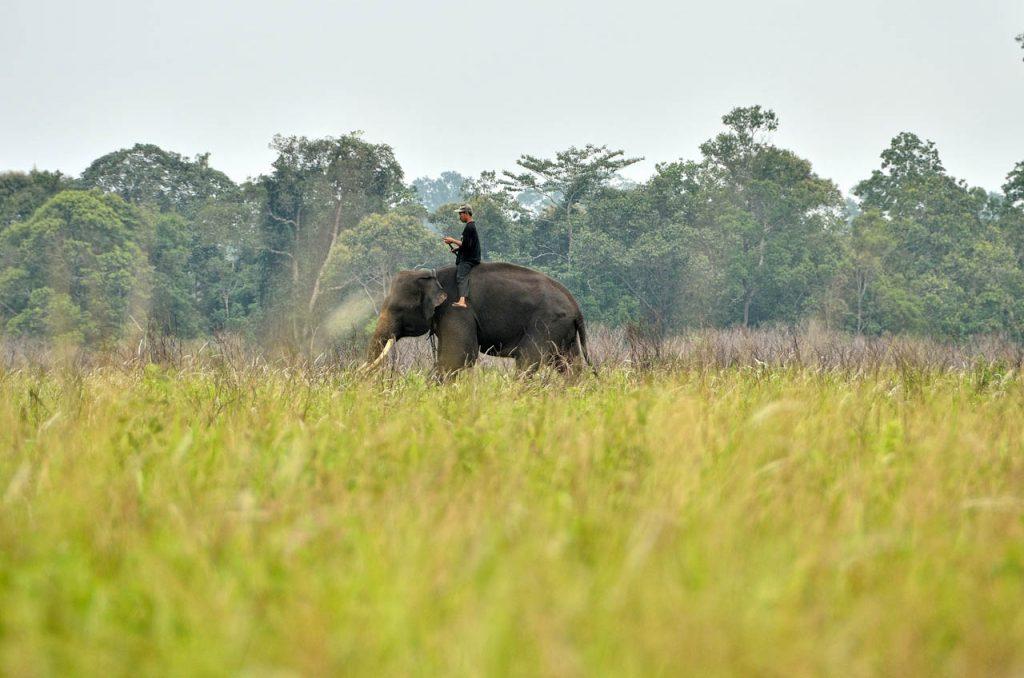 gajah - taman nasional way kambas - yopie pangkey - 4