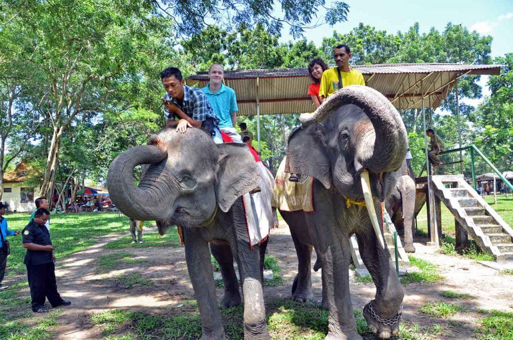 gajah - taman nasional way kambas - yopie pangkey - 5