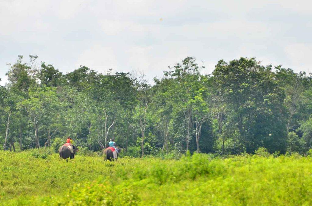 gajah - taman nasional way kambas - yopie pangkey - 6