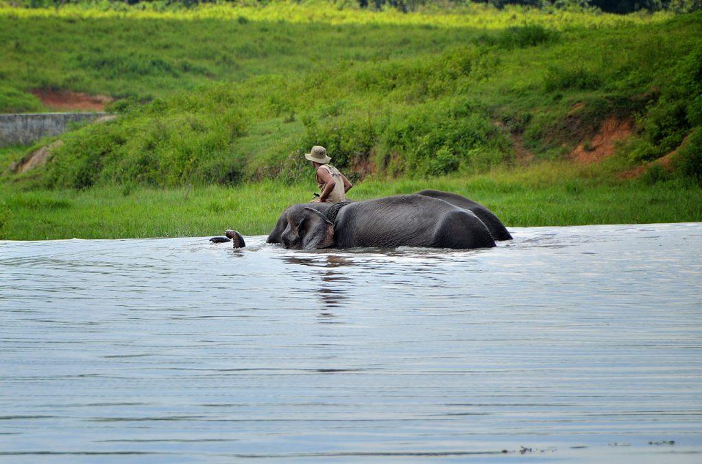 gajah - taman nasional way kambas - yopie pangkey - 7