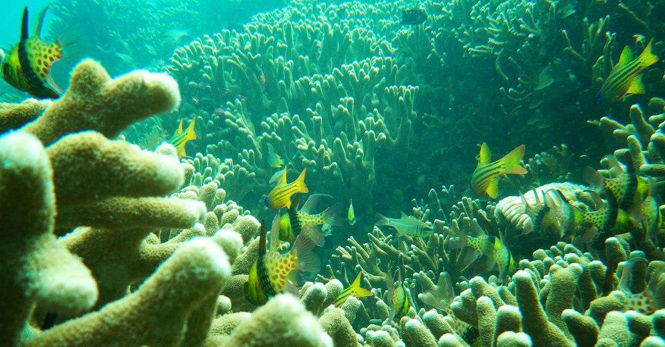 Tanjung Putus - Yopie Pangkey - 4