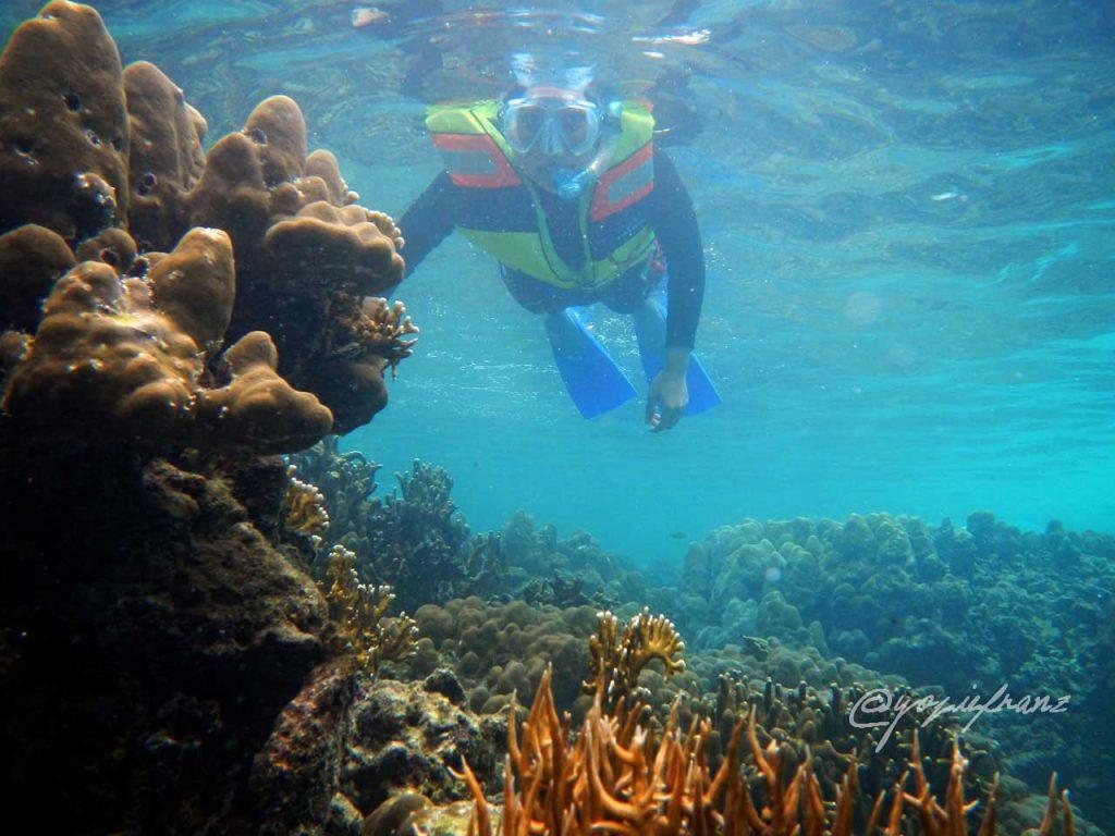 snorkel di pulau tegal - Yopie Pangkey