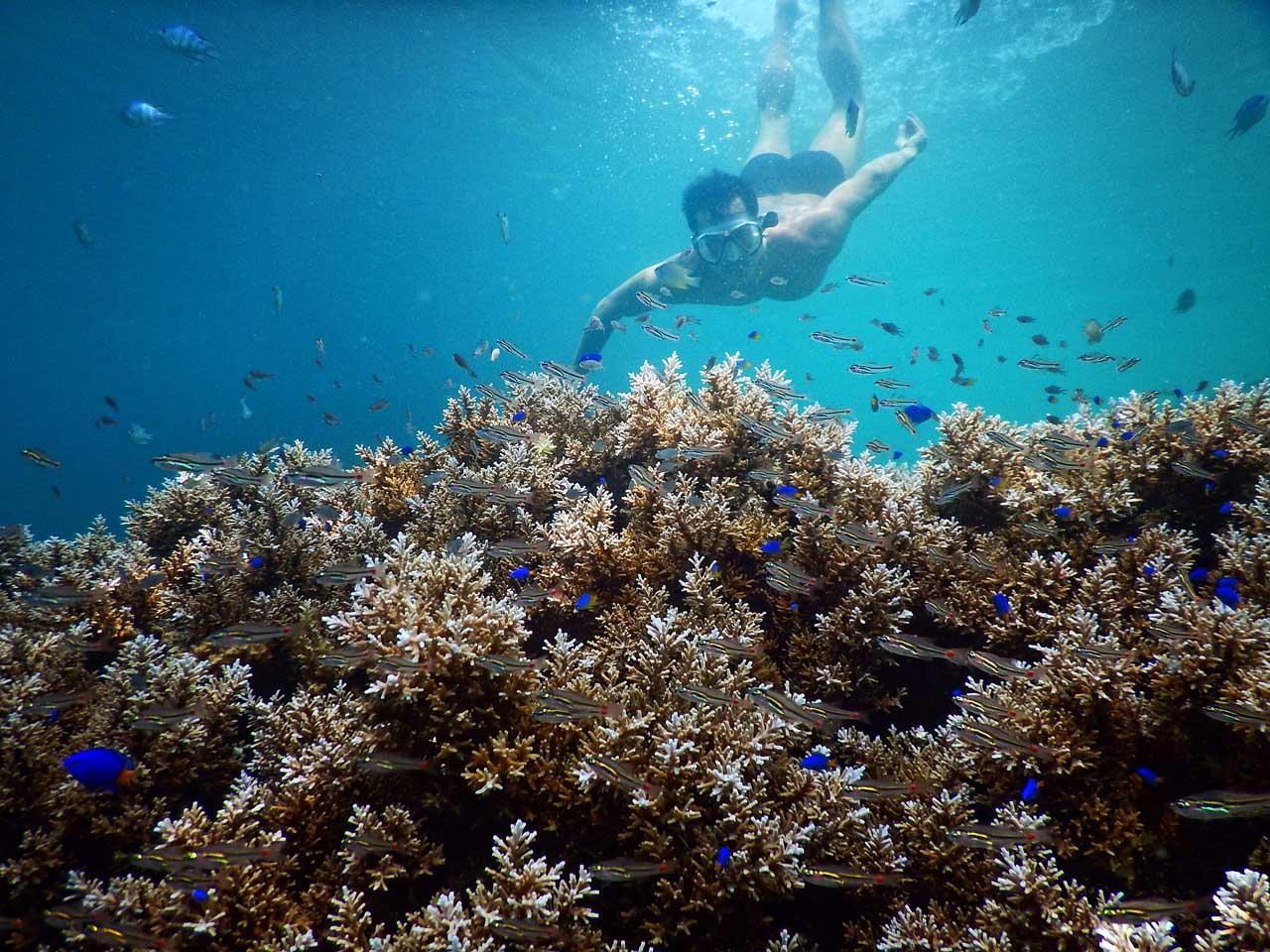 Bawah laut pulau Kelagian - kab Pesawaran - Yopie Pangkey