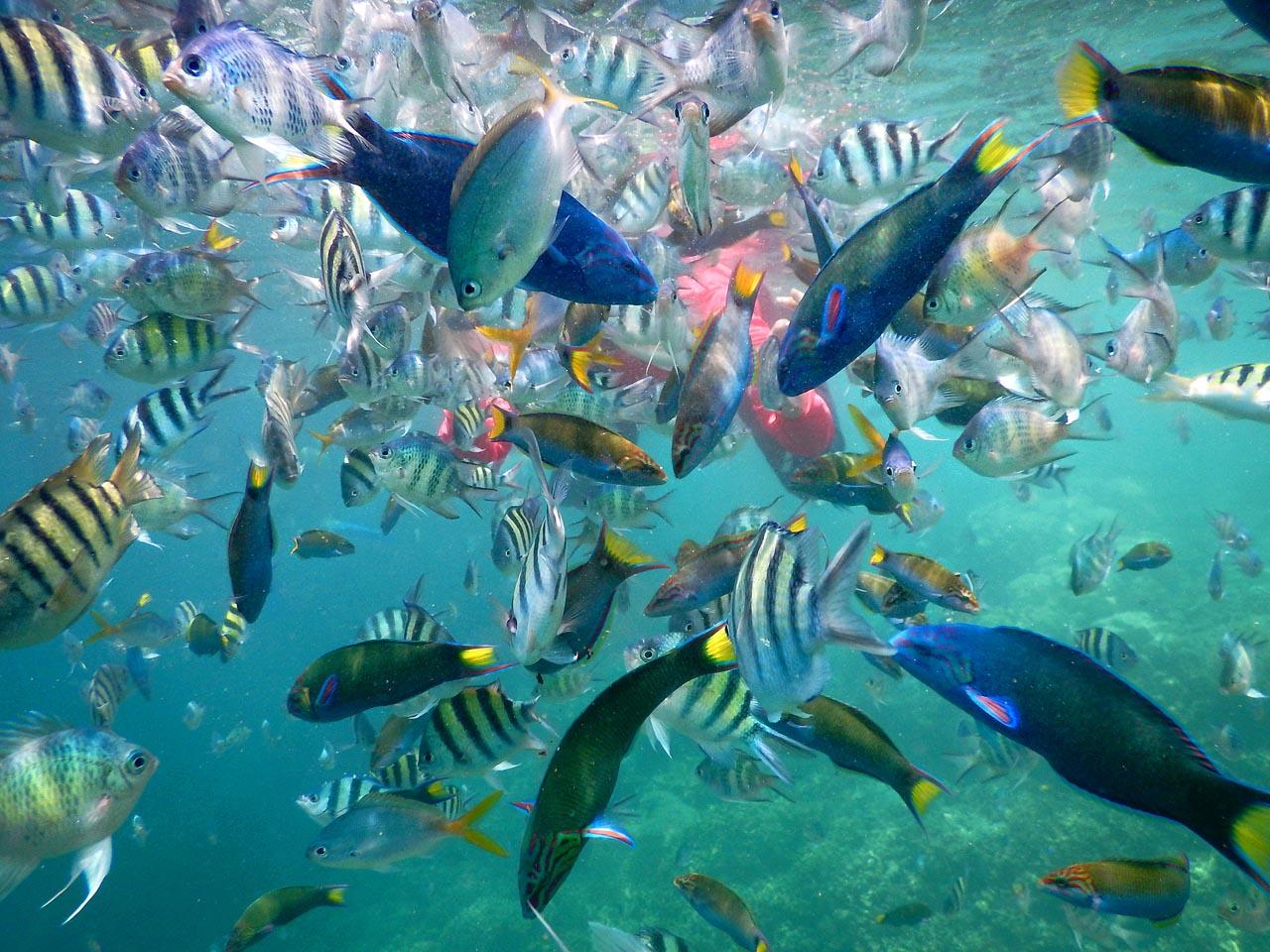 Ikan di pulau Tanjung Putus - kab Pesawaran - Yopie Pangkey