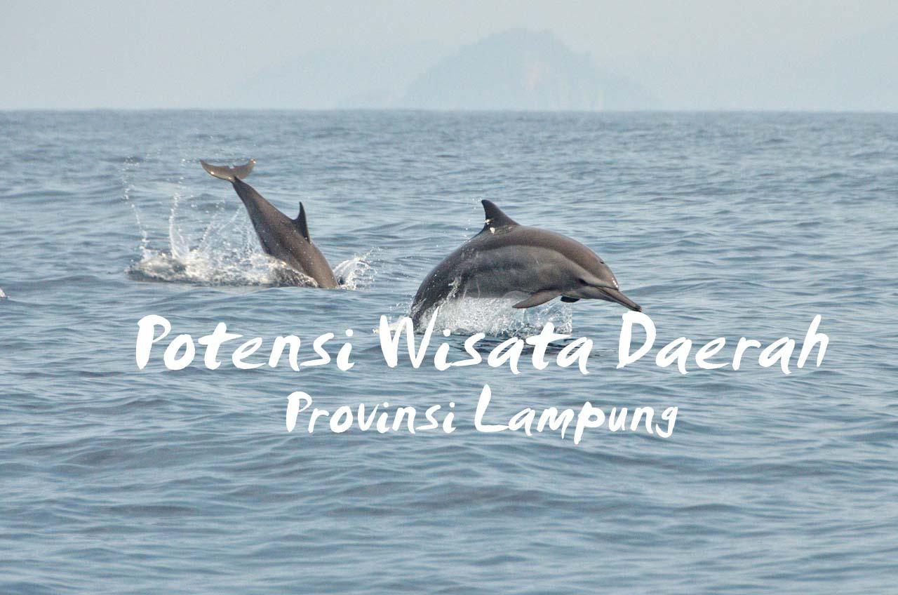 Lumba-lumba sekitar teluk Kiluan - Yopie Pangkey