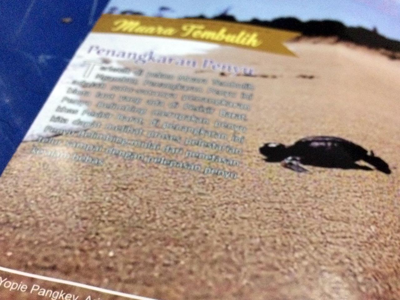 Foto Tukik di brosur pariwisata pesisir barat lampung