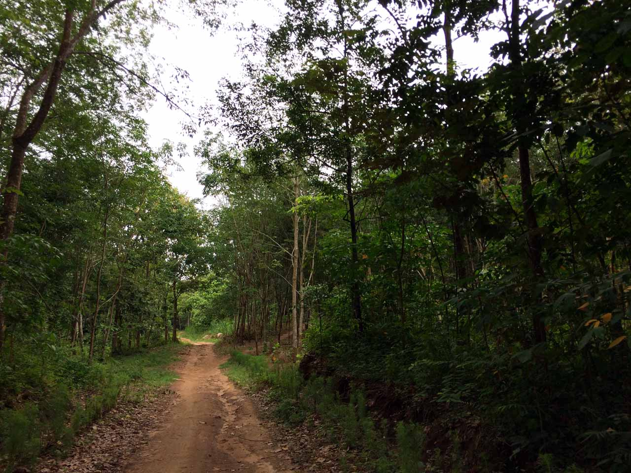 Jalan masuk Gunung Batu Srikaton - Yopie Pangkey