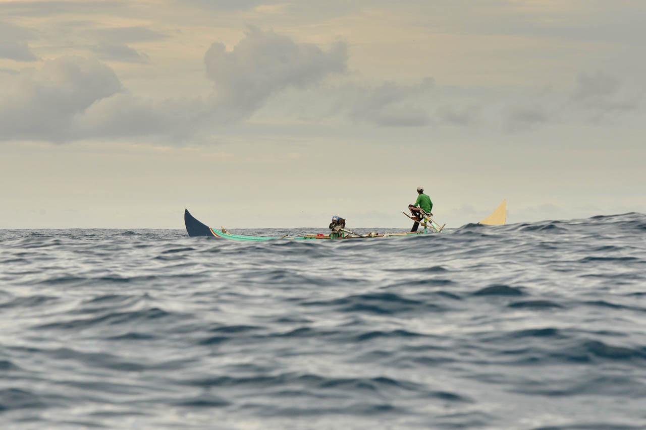 Tur lumba-lumba, mencari lumba-lumba liar di habitat aslinya. Teluk Kiluan. 2
