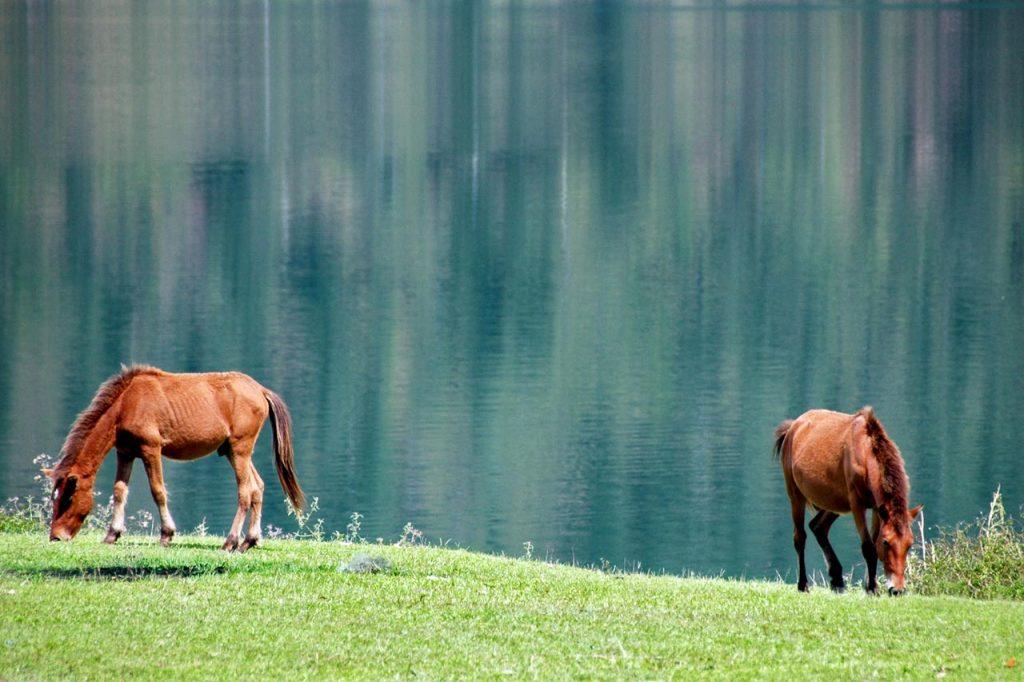 kuda astaga - tempat wisata di takengon - aceh tengah - yopie pangkey