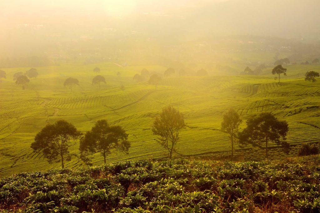 wisata kebun teh gunung dempo - tempat wisata di sumatera selatan - yopie pangkey - 1