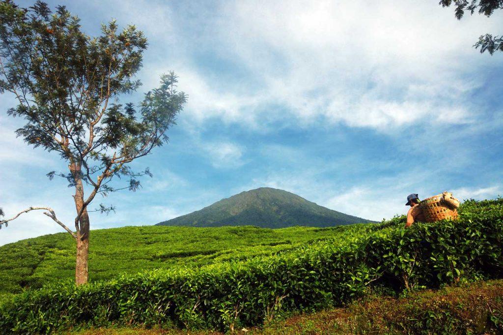 wisata kebun teh gunung dempo - tempat wisata di sumatera selatan - yopie pangkey - 6