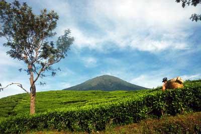 wisata kebun teh gunung dempo - tempat wisata di sumatera selatan - yopie pangkey