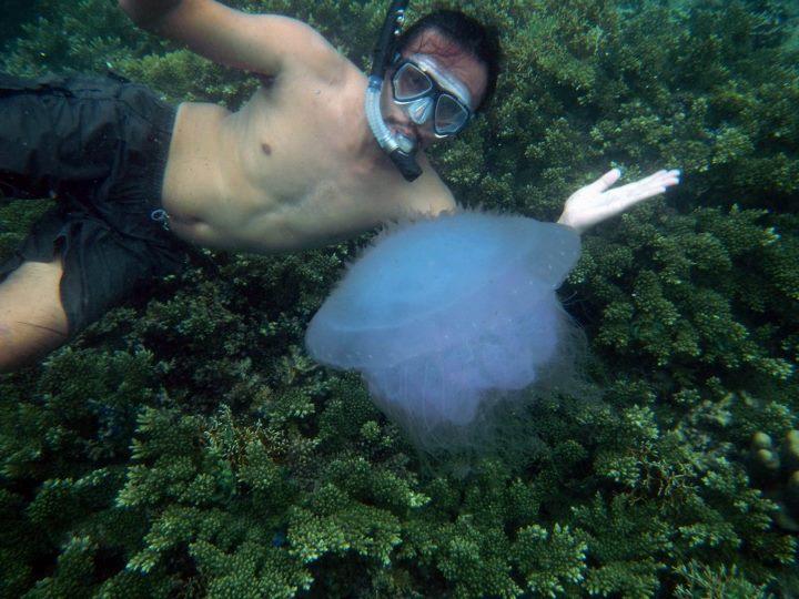 Jellyfish - Pulau Pahawang