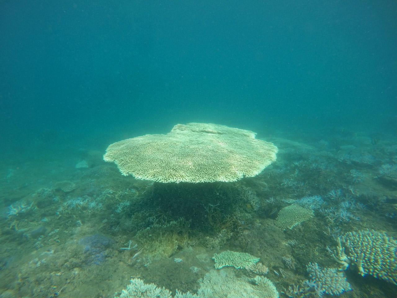 Teluk Kiluan - Tempat Wisata di Lampung - Yopie Pangkey - 9