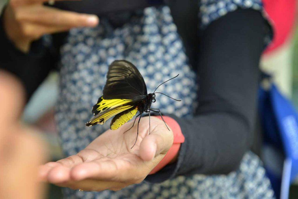 Taman kupu kupu Gita Persada - Yopie Pangkey - 1