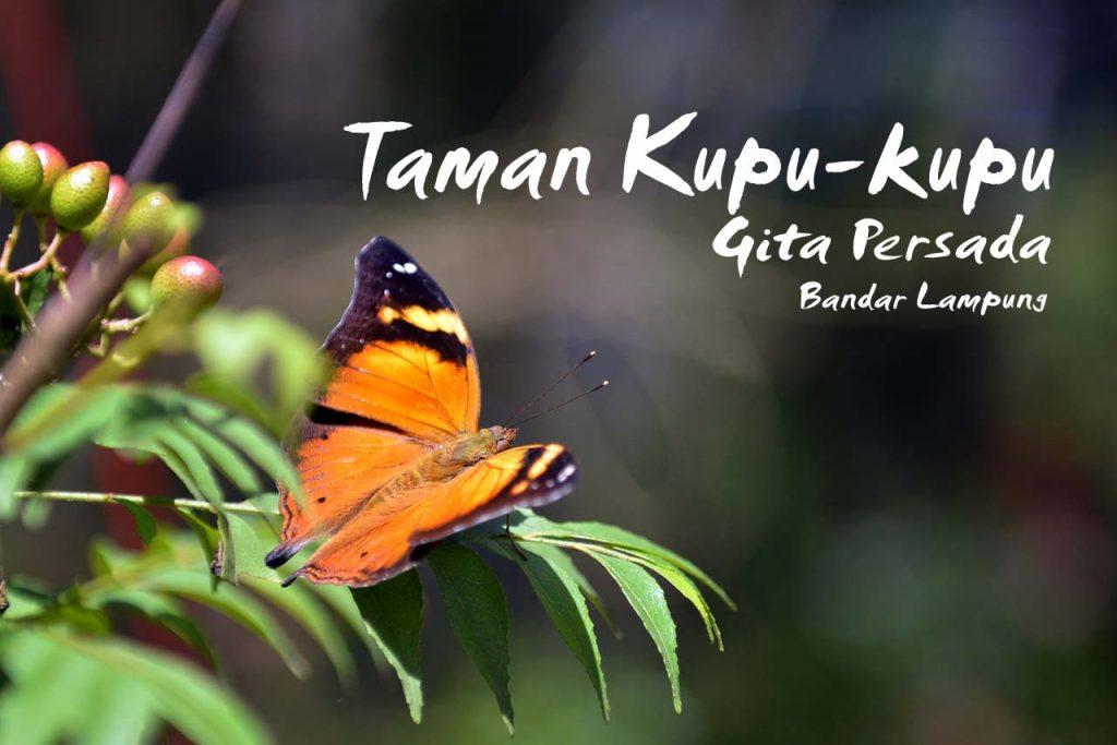 Taman kupu-kupu Gita Persada - Yopie Pangkey - 11