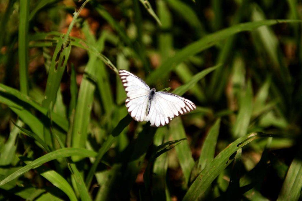 Taman kupu kupu Gita Persada - Yopie Pangkey - 13