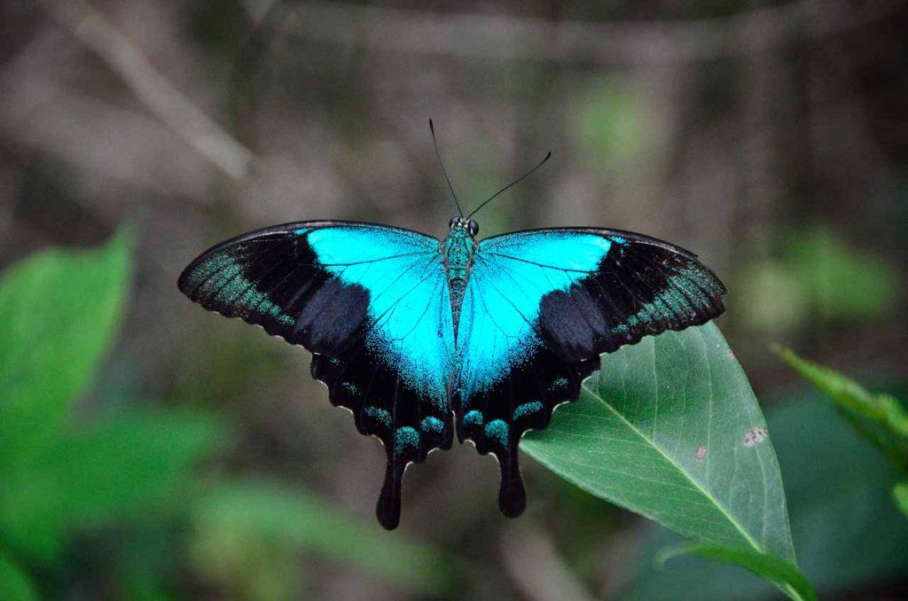 Taman kupu kupu Gita Persada - Yopie Pangkey - 18