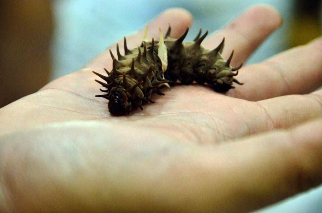 Taman kupu kupu Gita Persada - Yopie Pangkey - 19