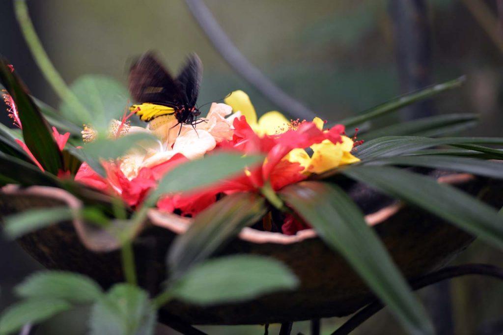 Taman kupu kupu Gita Persada - Yopie Pangkey - 6