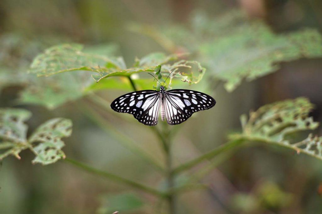 Taman kupu kupu Gita Persada - Yopie Pangkey - 7