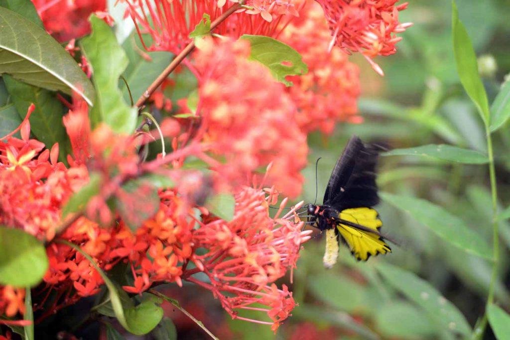 Taman kupu kupu Gita Persada - Yopie Pangkey - 8
