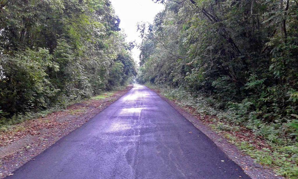 gajah - taman nasional way kambas - yopie pangkey - 1