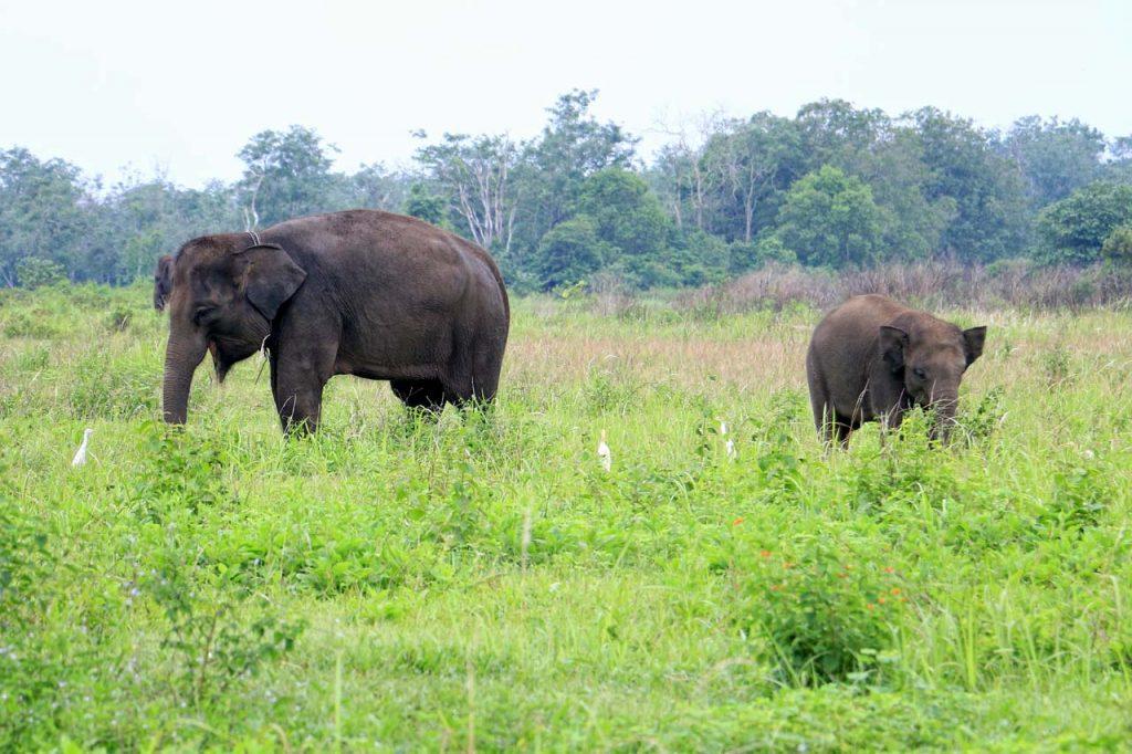 gajah - taman nasional way kambas - yopie pangkey - 11
