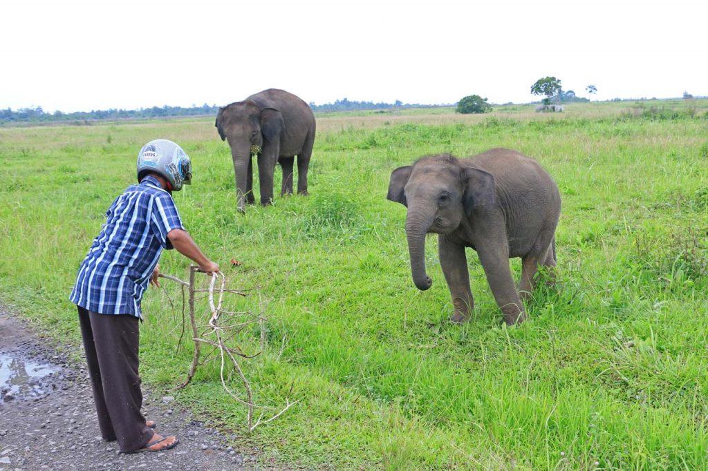 gajah - taman nasional way kambas - yopie pangkey - 12