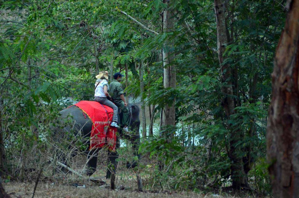 gajah - taman nasional way kambas - yopie pangkey - 2