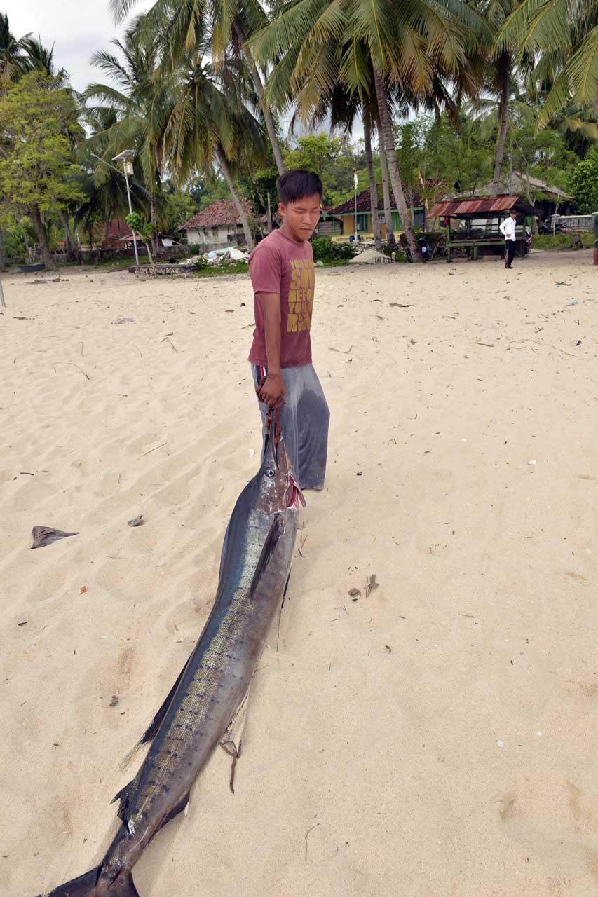 Ikan tuhuk - Pulau Pisang - Yopie Pangkey