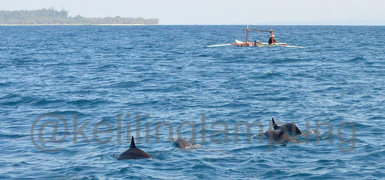 Lumba lumba pulau Pisang Pesisir Barat Lampung - Yopie Pangkey - 1