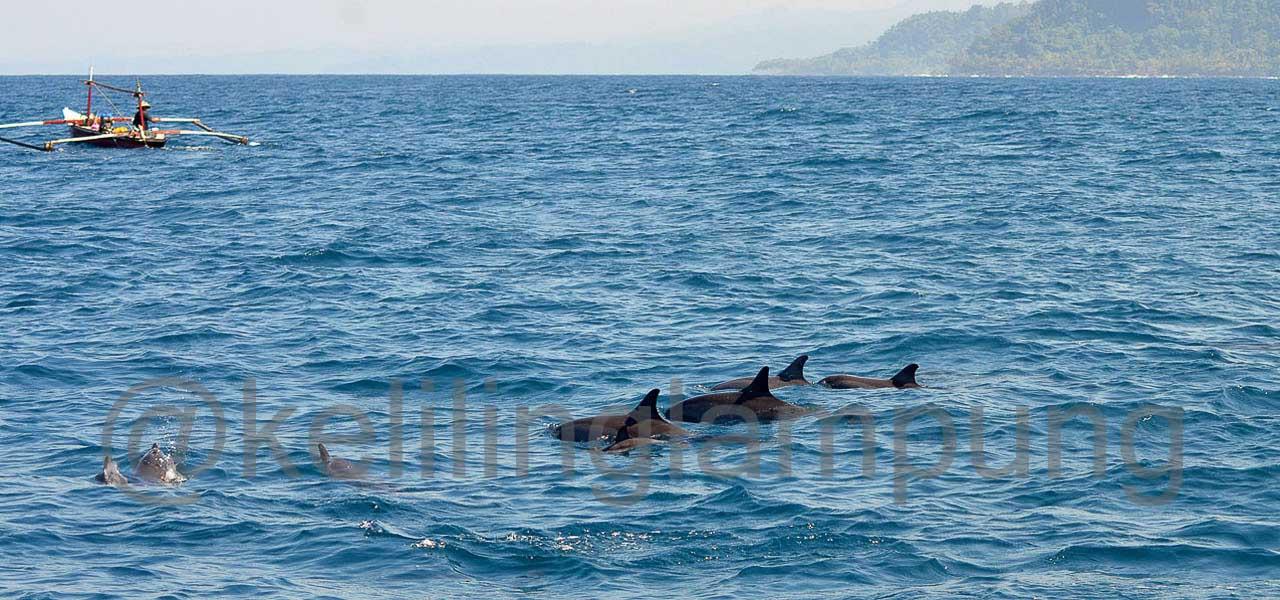 Lumba lumba pulau Pisang Pesisir Barat Lampung - Yopie Pangkey - 2