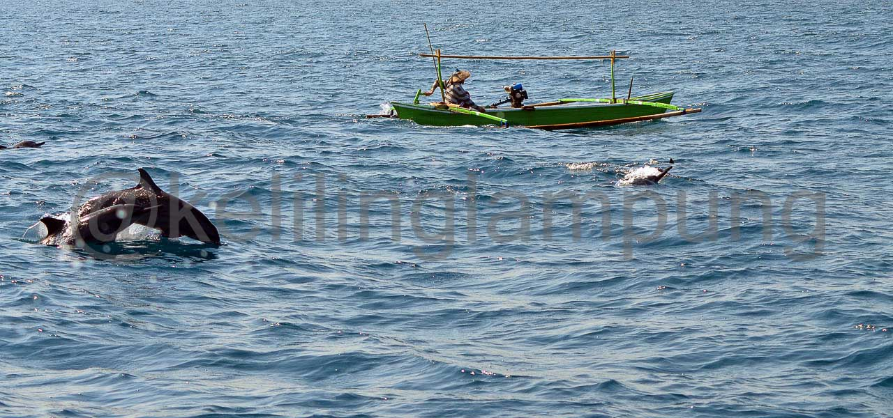 Lumba lumba pulau Pisang Pesisir Barat Lampung - Yopie Pangkey - 3