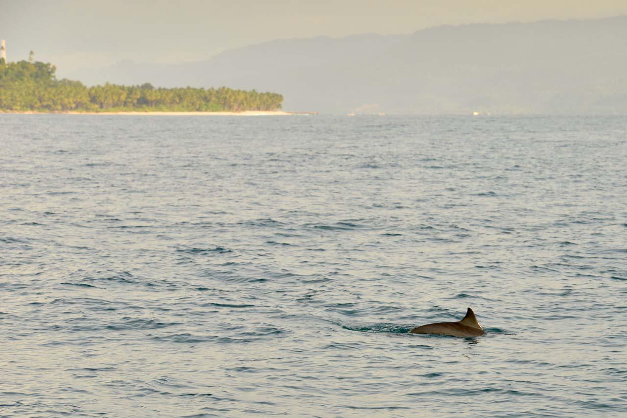 Lumba lumba pulau Pisang Pesisir Barat Lampung - Yopie Pangkey - 5