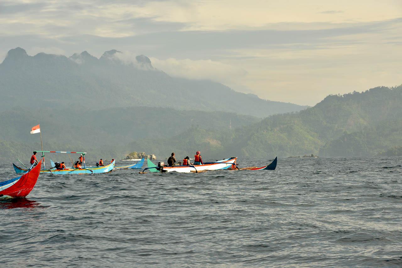 Tur lumba-lumba, mencari lumba-lumba liar di habitat aslinya. Teluk Kiluan.