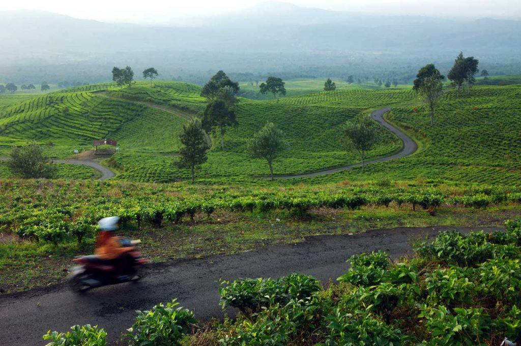 wisata kebun teh gunung dempo - tempat wisata di sumatera selatan - yopie pangkey - 7