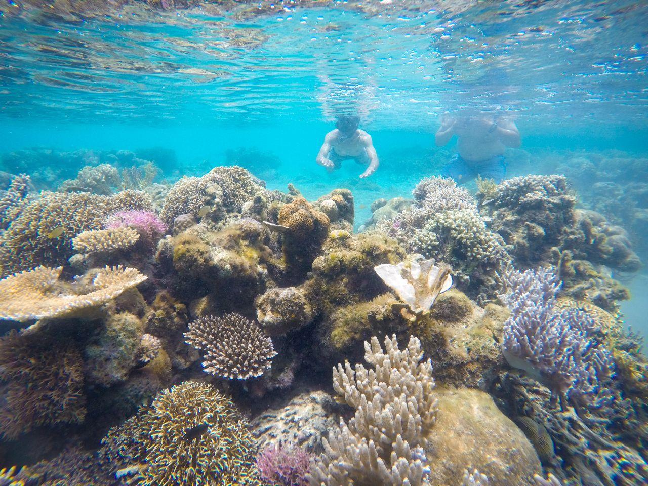 Bawah Laut Pulau Moyo - Teguh Prasetyo