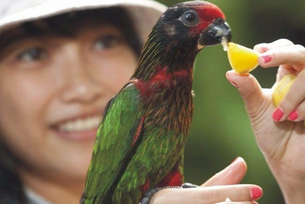 tempat wisata anak di Bali - Bali Bird Park