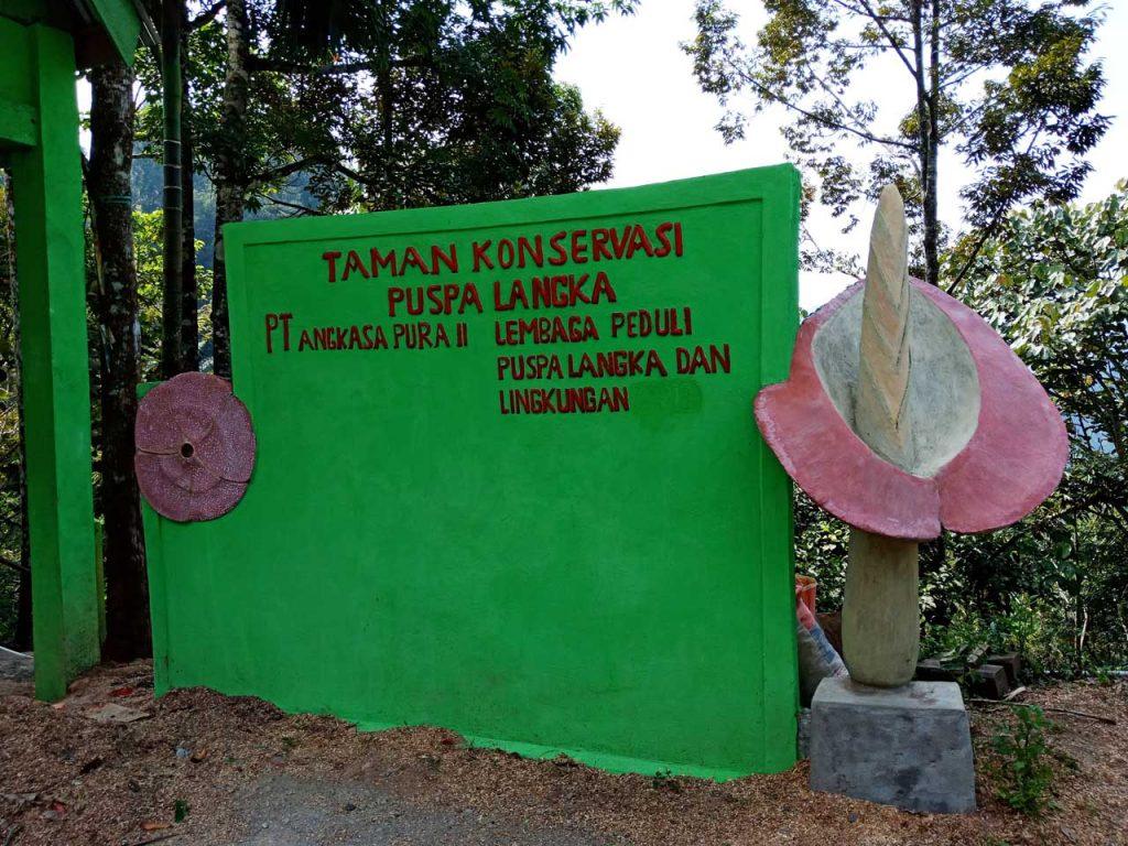 Lokasi Bunga Bangkai Bengkulu - Taman Konservasi Puspa Langka - Yopie Pangkey 10