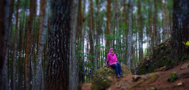 Hutan Pinussari Mangunan - tempat wisata jogja